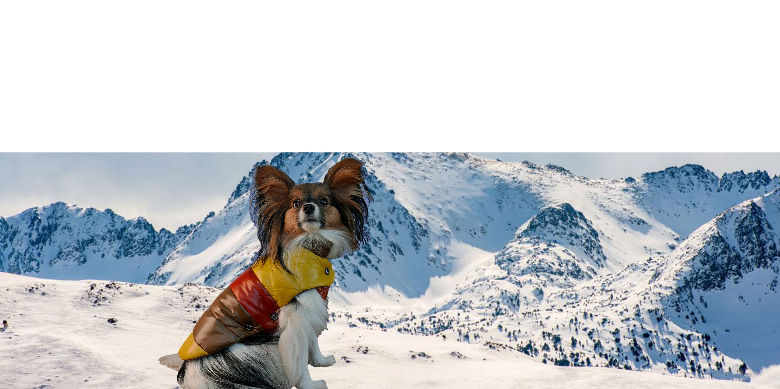 Dog-French-Touch-Doudoune-Mont-Blanc