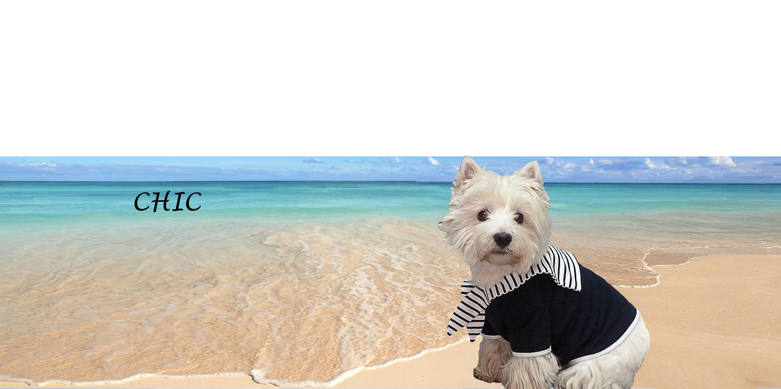 Dog-French-Touch-Biarritz-SailorSuit-Babou