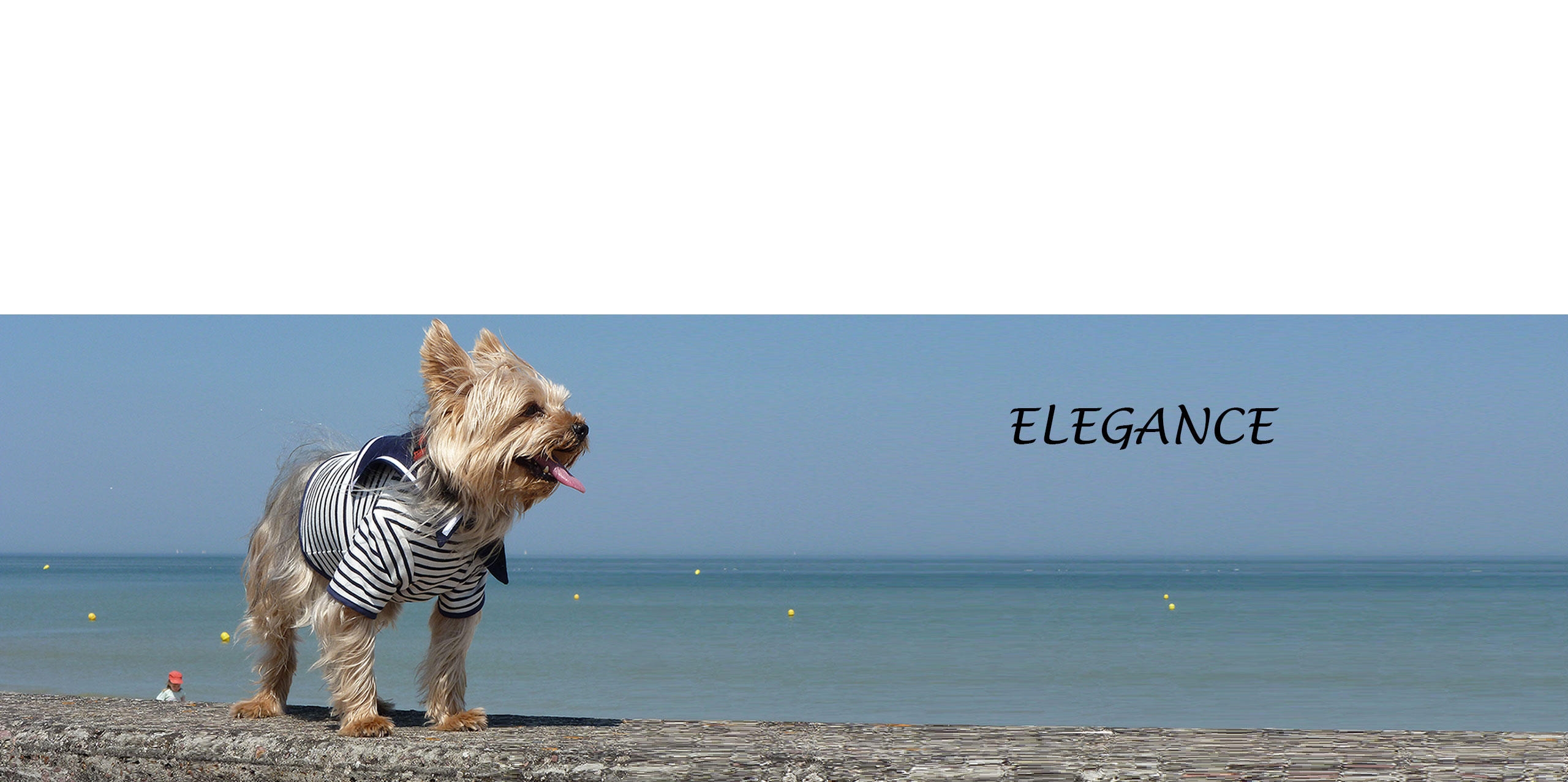 Dog-French-Touch-Marinière-Normandie-Tonus-plage